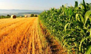 Coldiretti Sardegna. E' urgente lo sblocco dei pagamenti per una agricoltura in ginocchio