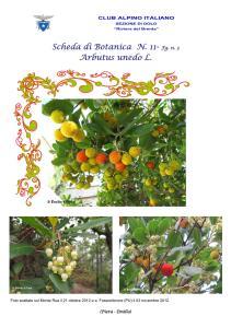 Arbutus unedo fg. 3