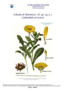 Scheda di Botanica n. 49 Calendula arvensis fg.2 - Piera, Emilio