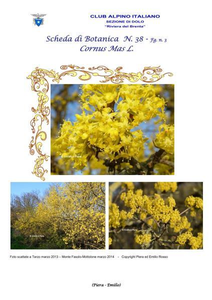 Scheda di Botanica N. 38 Cornus mas fg. 1 - Piera, Emilio