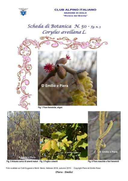 Scheda di Botanica n. 50 Corylus avellana L. fg. 1 - Piera, Emilio