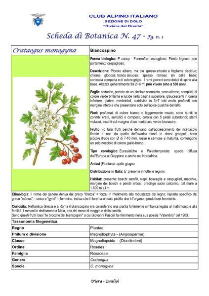 Scheda di Botanica n. 47 Crataegus monogyna fg. 1 - Piera, Emilio