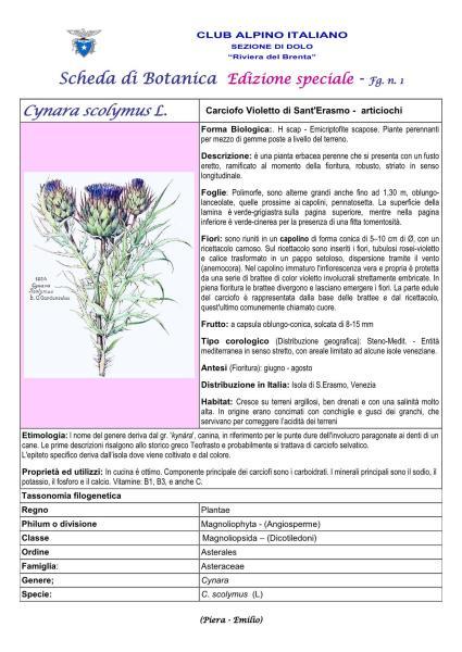 Scheda di Botanica Edizione Speciale N.53_bis fg. 1 Cynara scolymus - Piera, Emilio