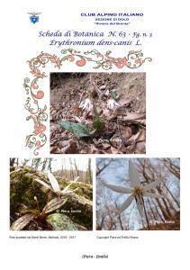 Scheda di Botanica N. 63 Erythronium-dens-canis fg 3 Piera, Emilio