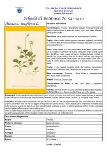 Scheda di Botanica n. 54 Moneses uniflora fg. 1 - Piera, Emilio