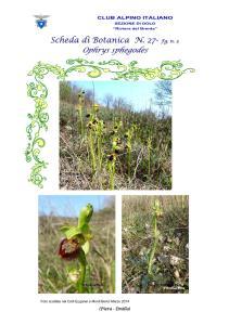 Ophrys sphegodes fg. 3