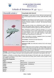 Scheda di Botanica n. 45 Potentilla nitida fg. 1- Piera, Emilio