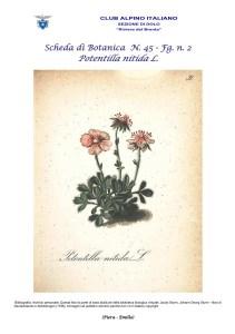 Scheda di Botanica n. 45 Potentilla nitida fg. 2 - Piera, Emilio