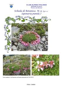 Saponaria pumila fg. 3