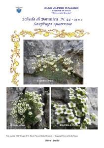 Scheda di Botanica n. 44 Saxifraga squarrosa fg. 3 - Piera, Emilio