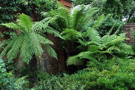 Ferns - magical protection on An Fheill Sheathan