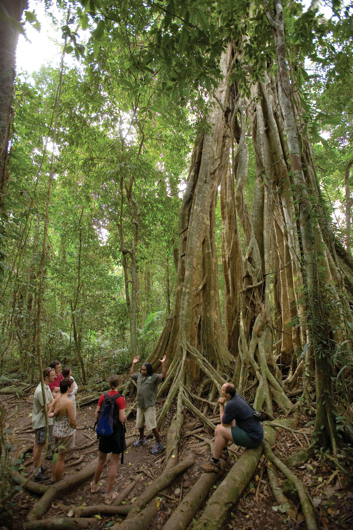 Down Under Tours Cairns Tourism Town Find Amp Book