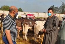أسواق الماشية بكفر الشيخ تعود للعمل مؤقتًا وسط إجراءات احترازية
