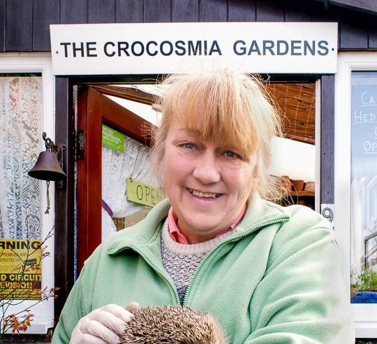 Caistor Crocosmia gardens