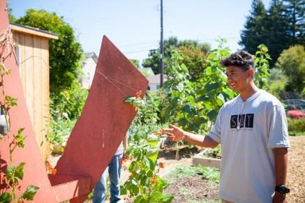 2016-07-12 Youth Jobs - Bayer Sunflower Restore-88