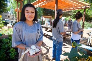 2016-07-12 Youth Jobs - Bayer Sunflower Restore-91