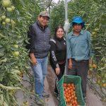 Productores agropecuarios ofrecerán tomate orgánico como alternativa de alimentación saludable