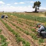 Arequipa ejecutará 12 proyectos agrícolas con S/ 25 millones