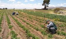 Foto de <Arequipa ejecutará 12 proyectos agrícolas con S/ 25 millones