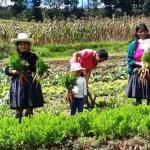 Usuarias de juntos producen hortalizas en biohuertos familiares