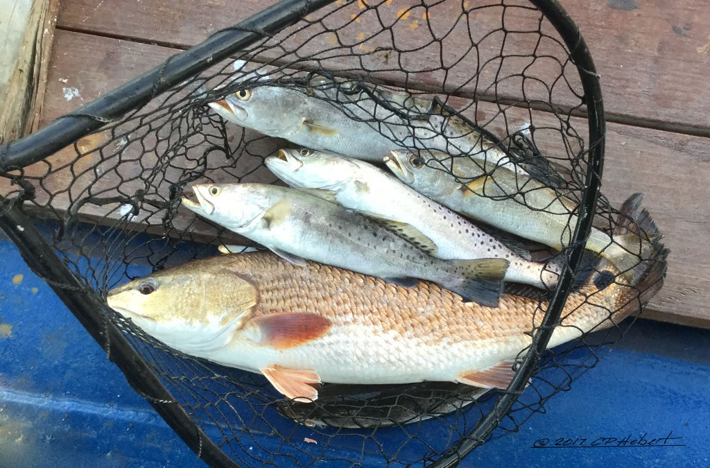 We haul redfish, speckled trout and white trout from the boats after a trip to the Curve, and other locations.
