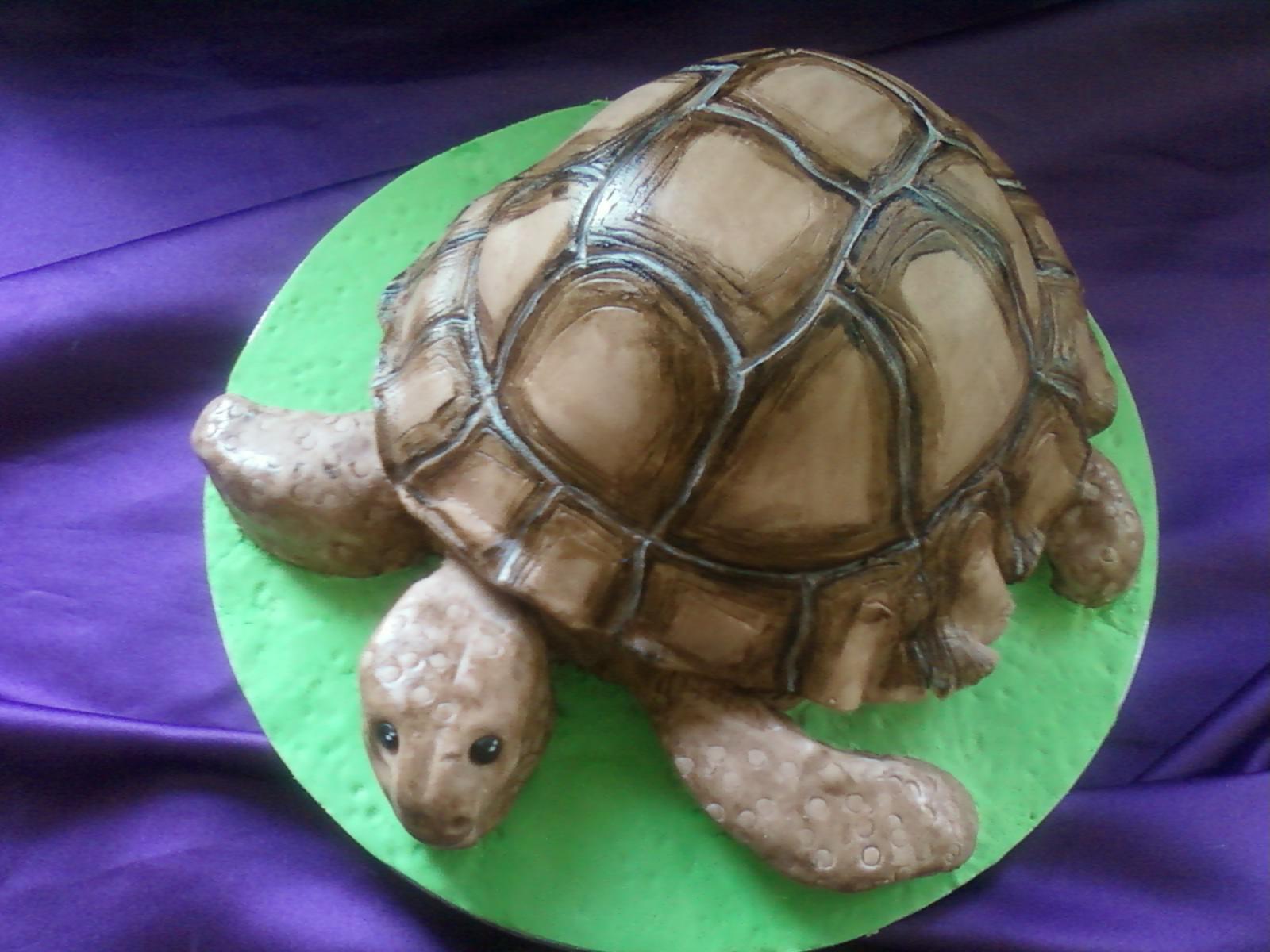 Tortoise Birthday Cakes