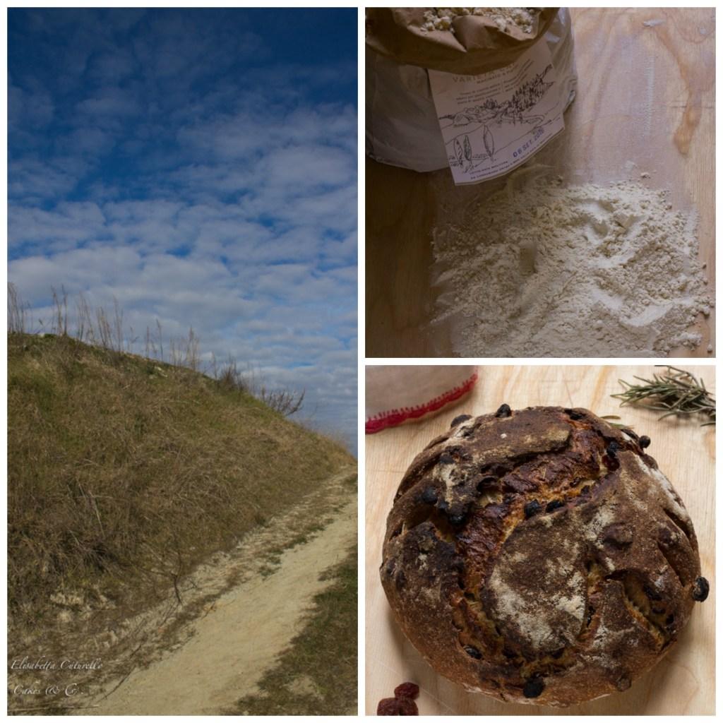 Pane semintegrale uvetta e rosmarino con farina Senatore Cappelli Monte Sante Marie