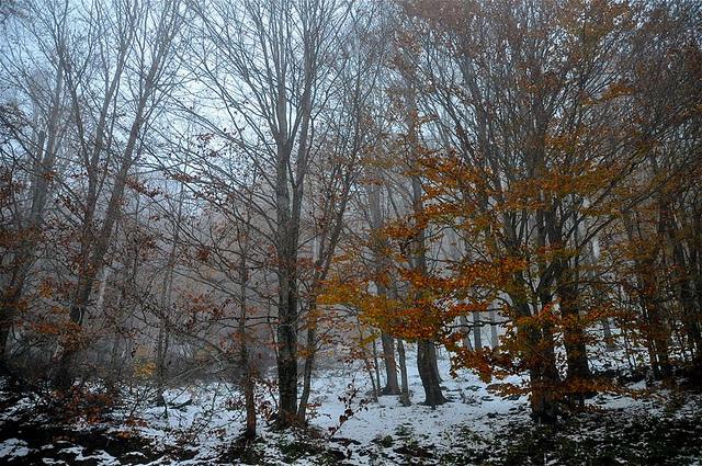 sciare in calabria bosco con neve