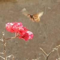 Fauna de Pichidangui y Aculeo