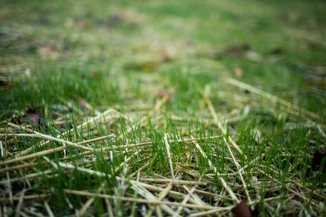 New grass growing in the backyard - taken with the Canon 35mm f/2 IS USM lens and a Canon 5D Mark III
