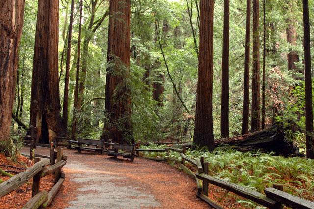 redwood-park
