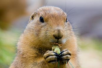 Resultado de imagen de dia de la marmota 2020