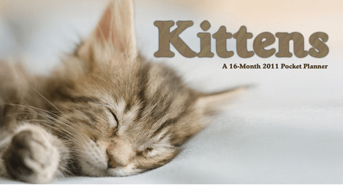 2017 Cute Kitten and Cats Planners and Calendars