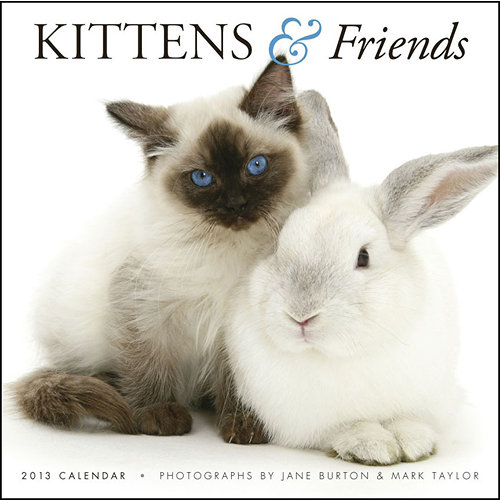 Cute Baby Animals Calendar 2013