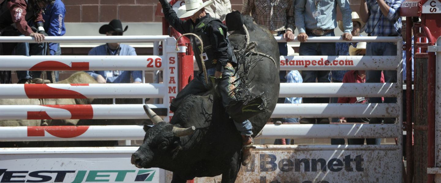 Bull Riding Rodeo Calgary Stampede