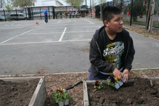 Fifth grader Eddie Navarro says he learned how to plant flowers from his father, who keeps a garden.