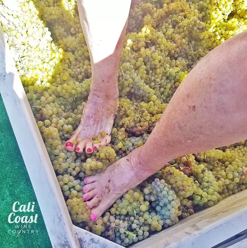 Grape Stomp in Solvang, Santa Ynez Valley, Santa Barbara County