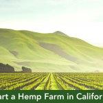 How To Start A Hemp Farm In California Part 1 California Cannabis Cpa
