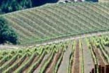 Wattle Creek Winery