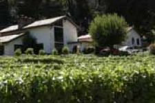 Westover Vineyards