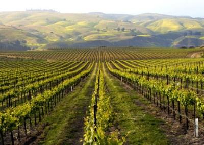 Davis Family Wines