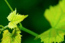 Creekview Vineyards