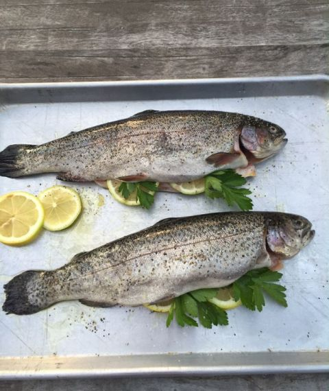 Grilled Fresh Trout with Lemon