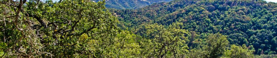 View south from Corral Trail, Henry W. Coe State Park