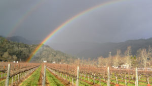 Calistoga-ava_rain