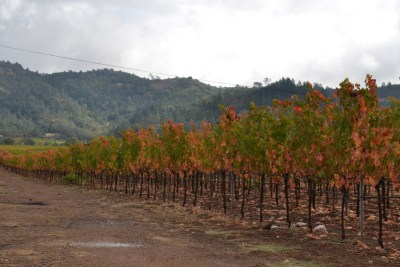 calistoga-ava_fall-vinyeard