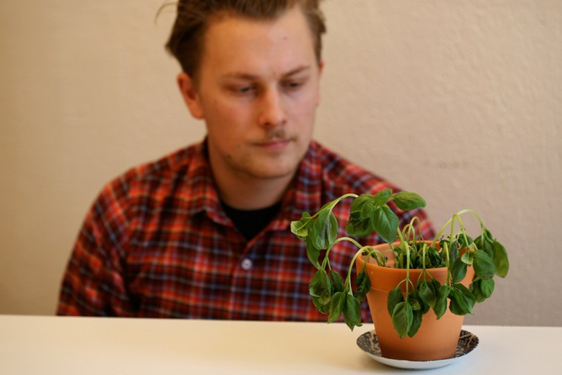 Artist Calle Holck sitting with a basil pot at a table in front of him.