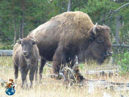 Fauna Parque Nacional Grand Teton