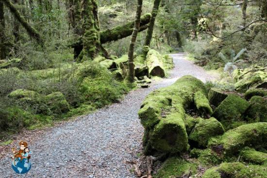 Lago Gunn - Milford Sound Road