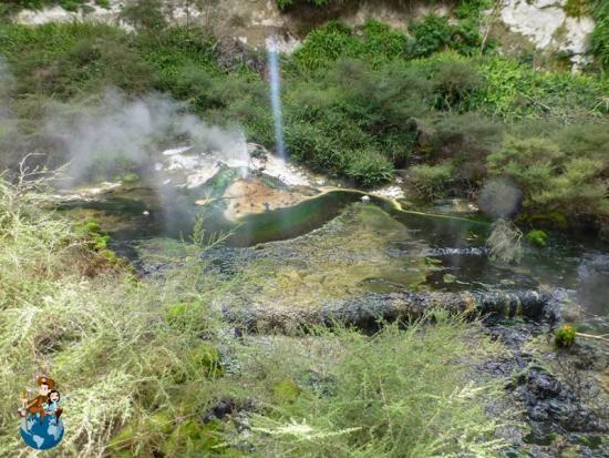 Manantiales termanesNga Puia o Te Papa - Waimangu